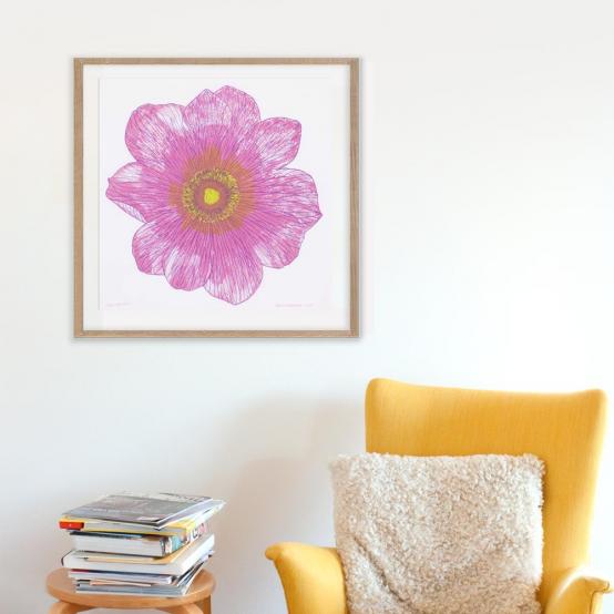 Anemone (rosa)